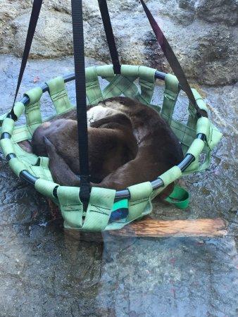 San Mateo, كاليفورنيا: Beaver bed