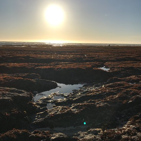 Moss Beach, CA: photo4.jpg