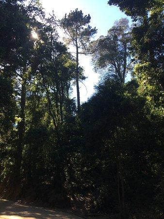 Cerro Caracol : sendero