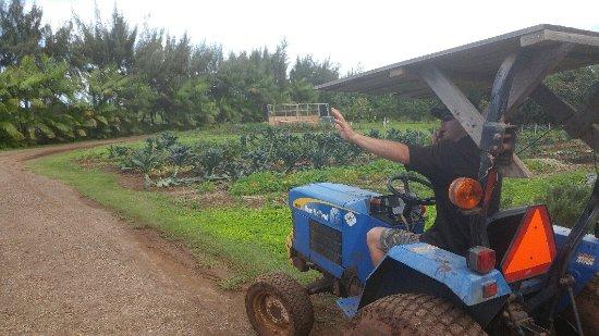 Kahuku Farms照片