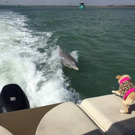 South Padre Island Dolphin Research & Sea Life Nature Center: photo0.jpg