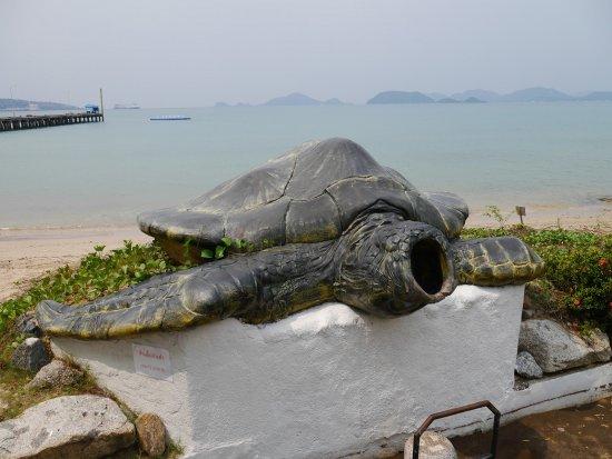 Sea Turtle Conservation Center, Sattahip: จุดถ่ายรูป