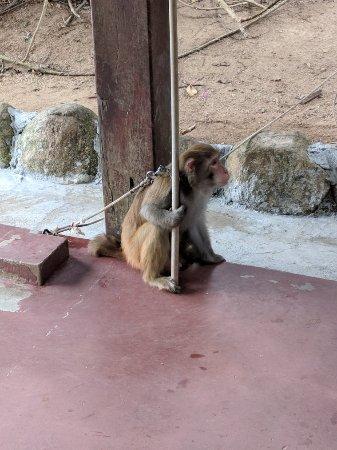 Lingshui County, China: Nanwan Monkey Island