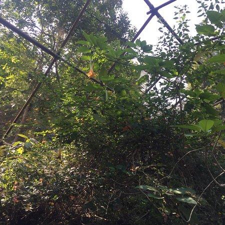 Kuang Si Falls Butterfly Park : photo5.jpg