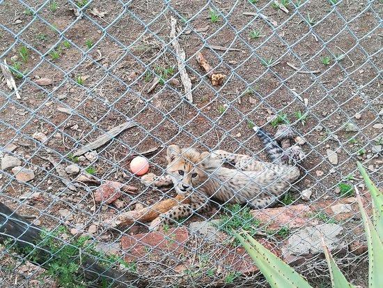 Kirkwood, Sydafrika: Cute as ever