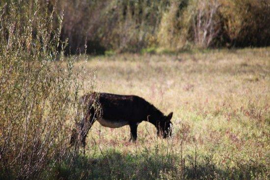 Alviano, Italien: Asini in libertà