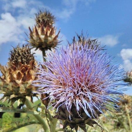 Muiden, Hollanda: Jardins