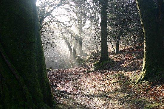 Camelford, UK: Helsbury woods