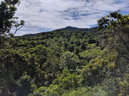 Daintree Discovery Centre: IMG_20180218_100924_large.jpg
