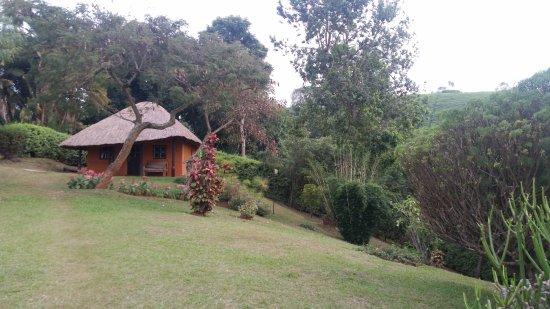 Chimpanzee Forest Guesthouse: Hutte dans jardin fleuri