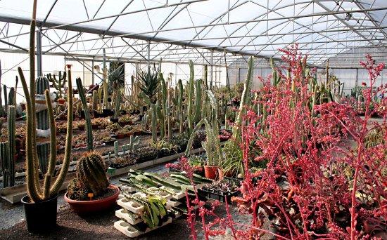 Kuentz le Monde des Cactus