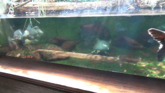 Aquarium kuva wilhelma zoo and botanical garden for Aquarium botanic