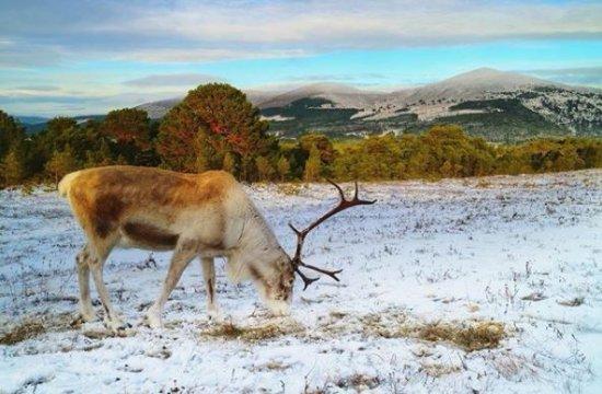 Cairngorm Reindeer Herd : Beautiful location