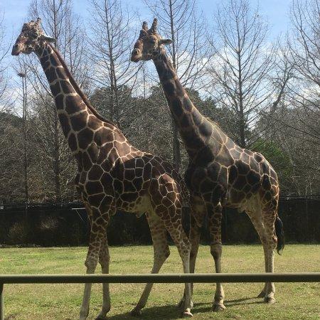 Audubon Park: photo1.jpg