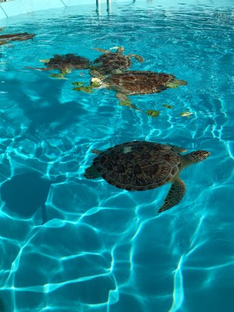 The Turtle Hospital: photo2.jpg