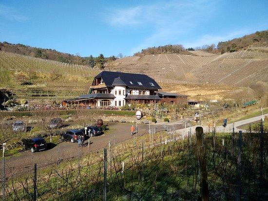 Mayschoss, Γερμανία: Der Michaelishof liegt unmittelbar am Rotweinwanderweg oberhalb von Mayschoß. Super Lage.