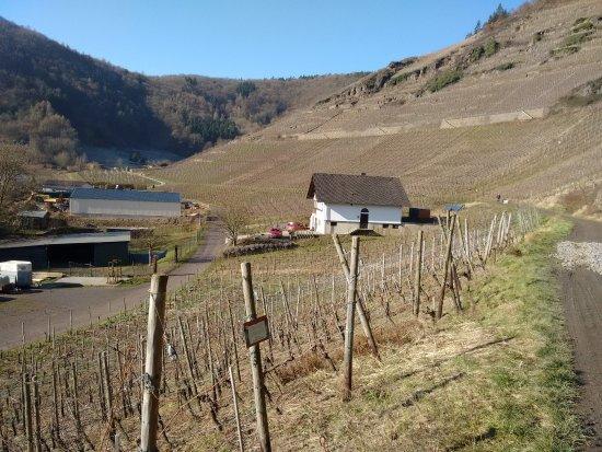 Mayschoss, Γερμανία: Urige Straußwirtschaft am Weinberg von Mayschoß