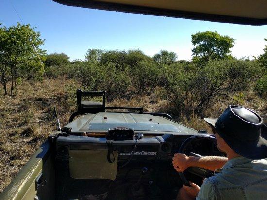 Заповедник Центральный Калахари, Ботсвана: Our expert guide Jan navigating through the bush tracking lions.