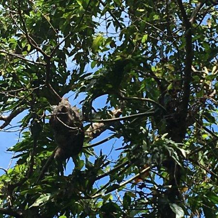 Cahuita, Costa Rica: photo1.jpg