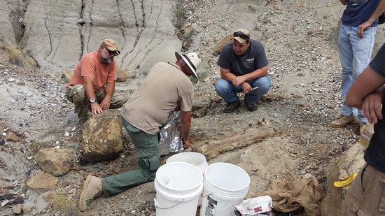 Murfreesboro, Tennessee: Digging up dinosaurs in Montana