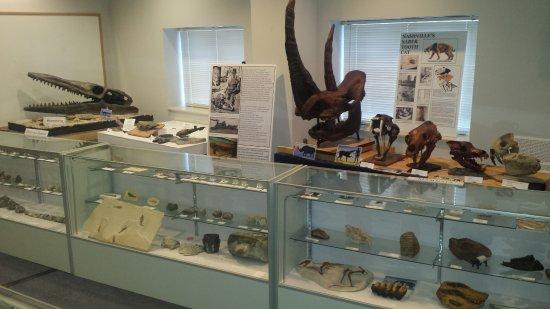 Murfreesboro, Tennessee: Ice age and marine fossils