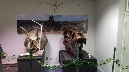 Murfreesboro, Tennessee: Trex and Triceratops skulls.
