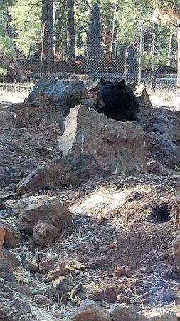 Bearizona Wildlife Park: wildlife park