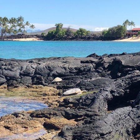 Beautiful Spot With Turtles And Hawaiian Monk Seal Picture Of Makalawena Pu U Ali I Kailua Kona Tripadvisor