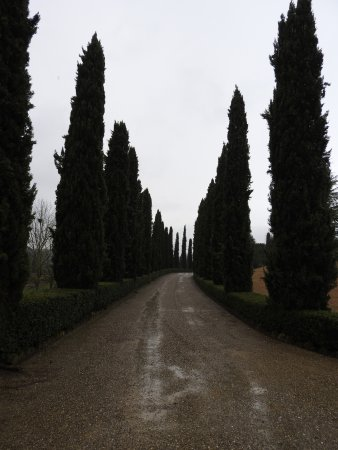 Barberino Val d'Elsa, Italy: Cypress lined driveway