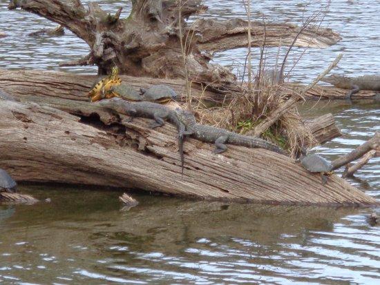 Harris Neck National Wildlife Refuge : Friends today