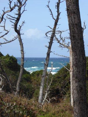 Mendocino Coast Botanical Gardens: Snags and Sea.