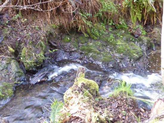 Mendocino Coast Botanical Gardens: Along the Fern Trail
