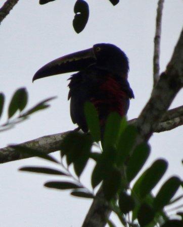 Sarapiqui, Costa Rica: Another one!