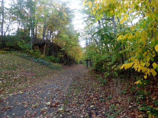 Max Meadows, VA: Trail view
