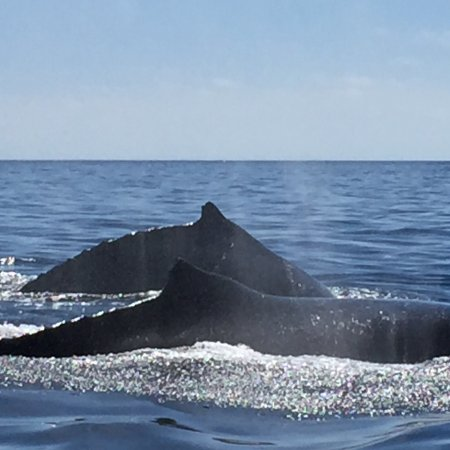 Whale Watch Cabo: photo0.jpg
