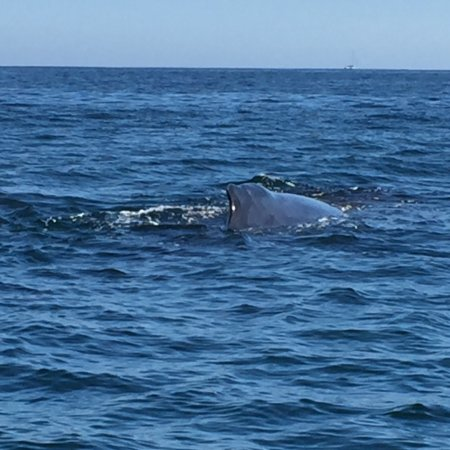 Whale Watch Cabo: photo2.jpg