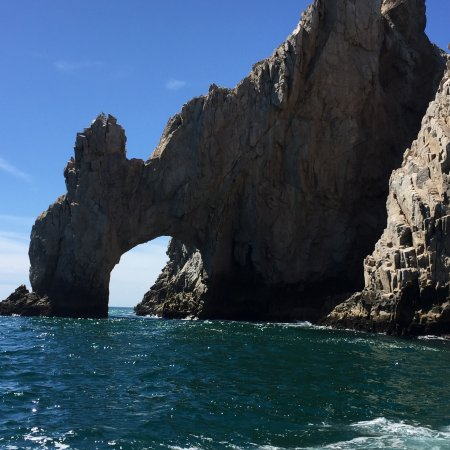 Whale Watch Cabo: photo4.jpg