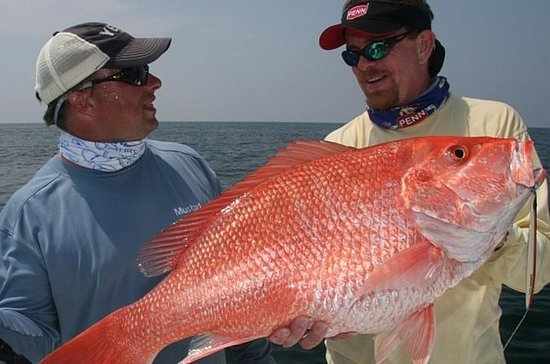 Half-Day Sport Fishing in the...