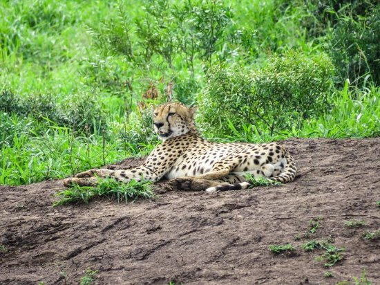 Phinda Private Game Reserve, South Africa: cheetah