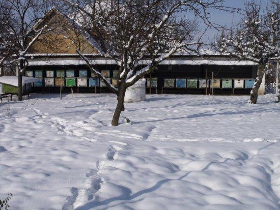 Sannicolau Mare Foto