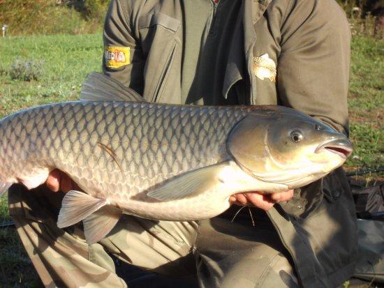 Chahaignes, France: L'autourserie, Carp fishing.
