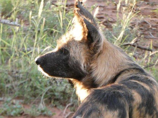 Madikwe Game Reserve, South Africa: Wild Life