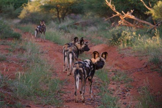Madikwe Game Reserve, Sudáfrica: Wild Life