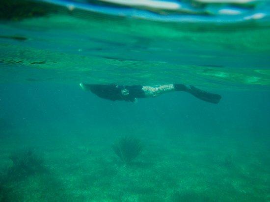 National Reef Park of Puerto Morelos : Snorkel position