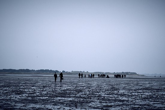 ‪‪Fanoe‬, الدنمارك: OysterSafari, walking 1,2 km into the Waddensea to pick as many oysters as you like.‬