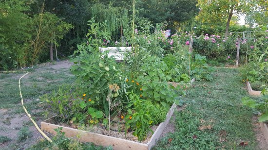 Jardin potager picture of la nesquiere pernes les for Jardin potager 78