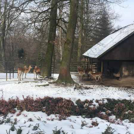 Krakow Zoo (Ogrod Zoologiczny)