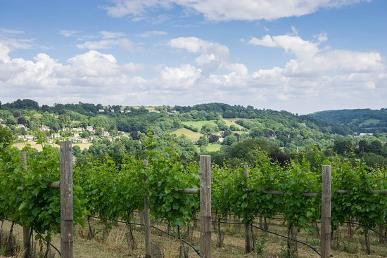 Woodchester Vineyard