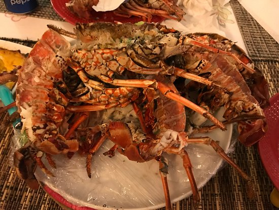 """Rochers Caraibes-Eco Village: Lobster """"at home"""""""