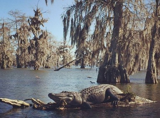 Westwego, LA: Ultimate Swamp Adventures